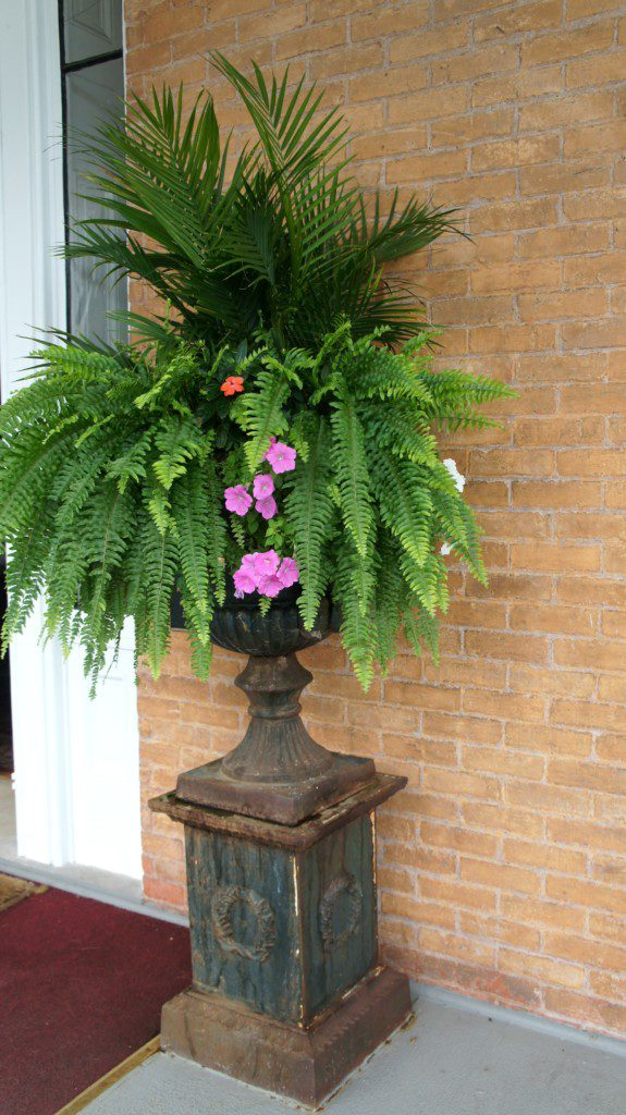 fern and flowers in urn