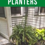pin image - ferns in tall planter