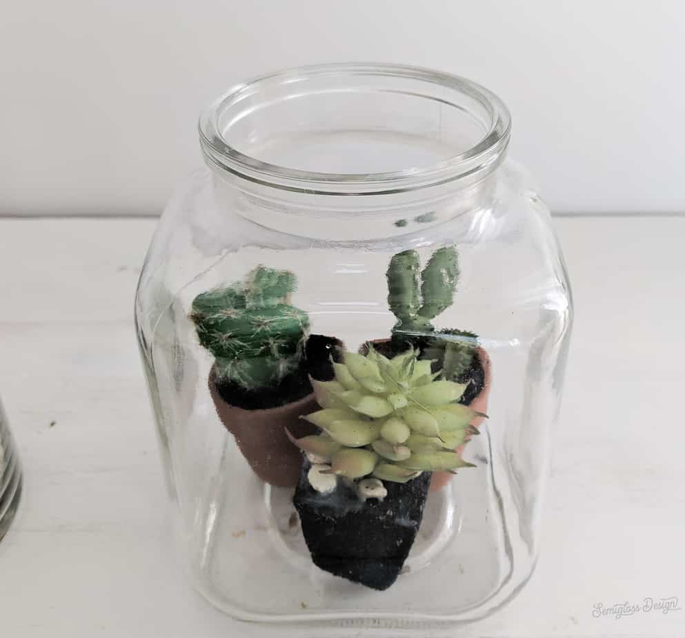 succulents in jar