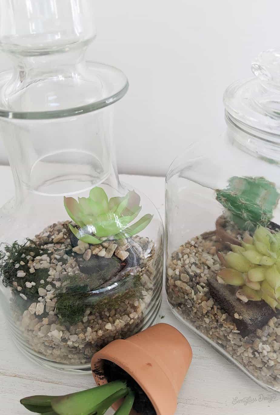 moss in jar