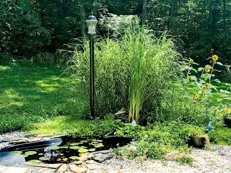 pond maintenance tips without chemicals