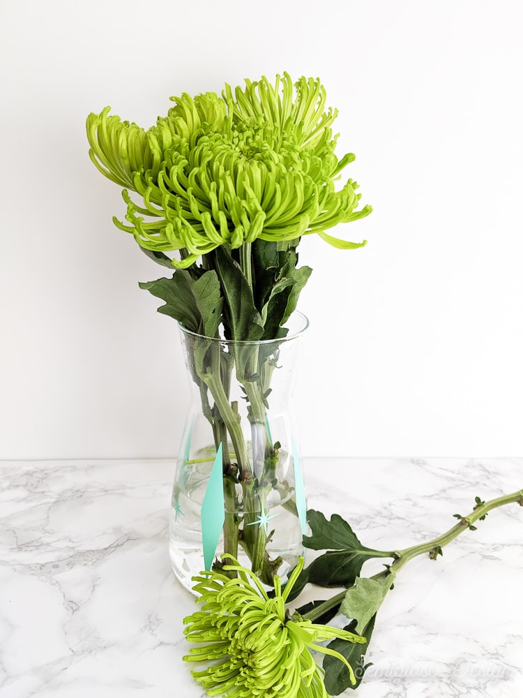 IKEA carafe as retro vase with green mum flowers
