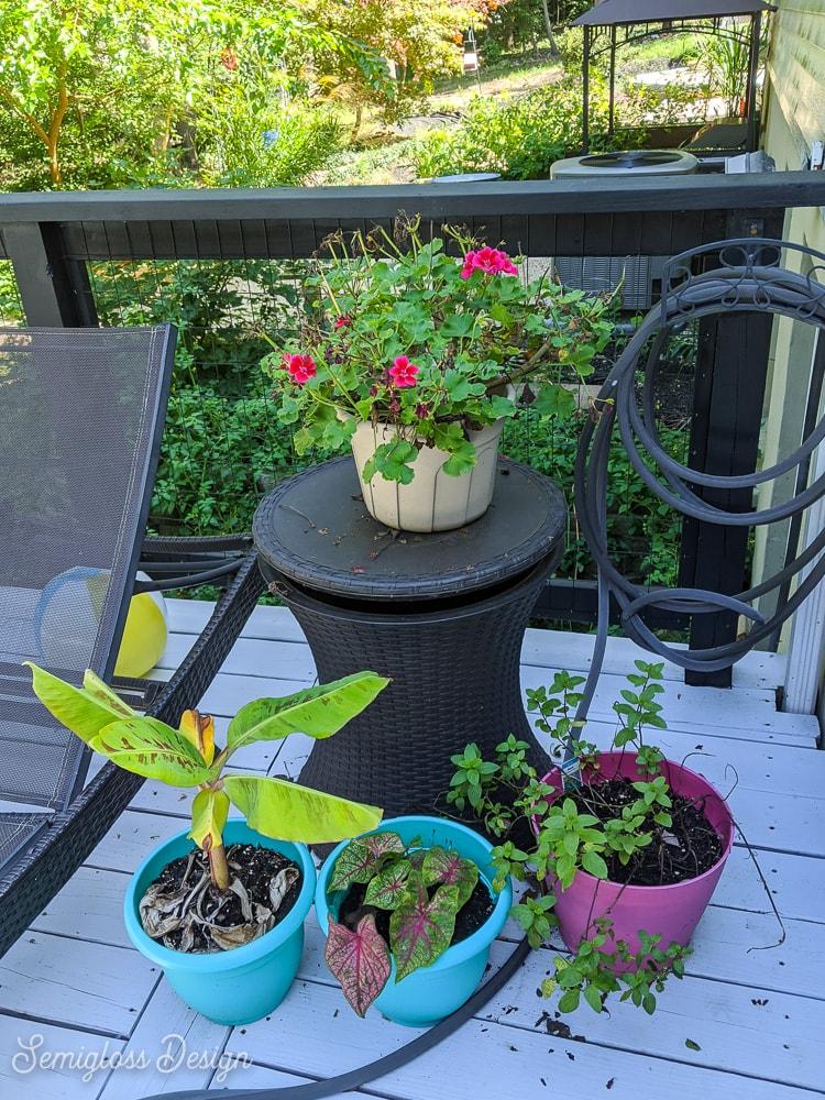 plants on deck