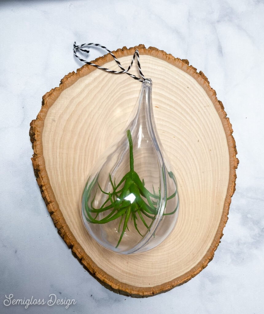 teardrop ornament filled with fake air plant on wood slab backdrop